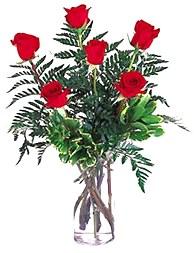6 Rosas