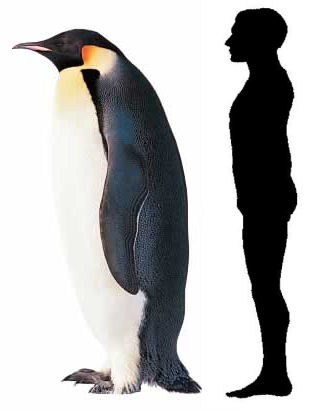 pinguinos_gigantes.jpg