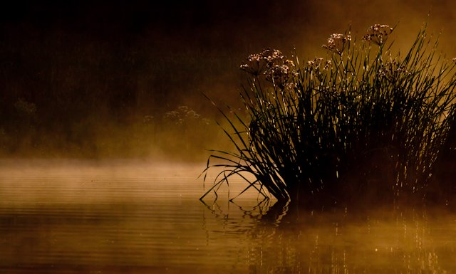 stockvault-morning-lake-and-fog128983