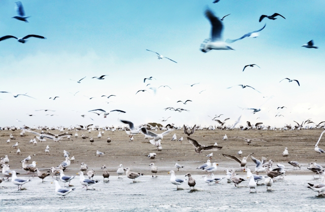 Seagulls on beach