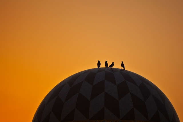 a nice picture of birds sitting on a dome
