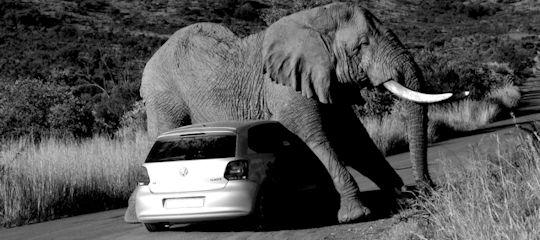 Elefantes en una cacharrería